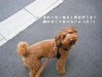 トレーニングハーネスの成果! - shoot !!