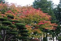 2017年10月15日(日)今朝の函館の天気と気温は。紅葉の函館 - 工房アンシャンテルール就労継続支援B型事業所(旧いか型たい焼き)セラピア函館代表ブログ