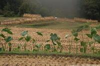 雨大和路収穫の秋 - ratoの山歩き