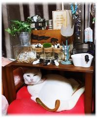 ◆好きなモノと植物と猫との暮らし(^ω^) - ☆彡ちいさな幸せ☆彡別館