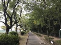 ご近所ポタ 昆陽池公園〜荒牧バラ公園 - 宝塚マドン