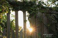 恋しい太陽 - ある日の足跡