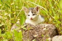 子猫 - 風見鶏日記