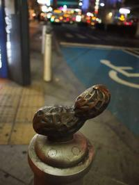 10月11日 今日の写真 - ainosatoブログ02