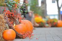 秋の冷たい風 - Triangle NY