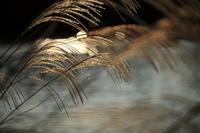 月光 - からくり時計 Photo Gallery
