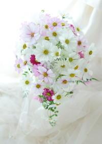 セミキャスケードブーケコスモスのブーケ、八芳園さまへ翌日に押し花に - 一会 ウエディングの花