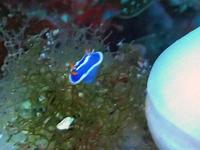 ナズマド日和が続いています\(^o^)/ - 八丈島ダイビングサービス カナロアへようこそ!