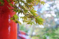 DOG PHOTO#117:CHERIと伏見稲荷へ。 - Precious*恋するカメラ