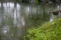 DU散歩  「長雨」 - Genie