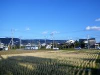 街なかの水田 中郷病院入口(ちゅうごうびょういんいりぐち) - さつませんだいバスみち散歩