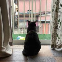 窓辺のひじき。 - ぶつぶつ独り言2(うちの猫ら2017)