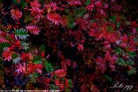 雨と紅葉 ・・・ - ぶらりカメラウォッチ・・