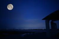 月見ヶ丘海浜公園 - ブナの写真日記