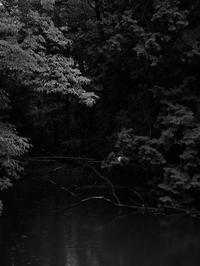 森の奥 - 節操のない写真館
