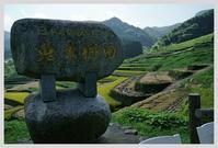 長崎・鬼木の棚田と案山子 - ■MAGの写真創庫■