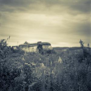 成長著しいセイタカアワダチソウと沈みゆく廃バス - Film&Gasoline