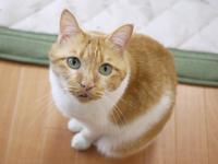 猫のお留守番 喜助くん編。 - ゆきねこ猫家族