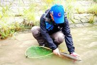 先週の犀川は… - ブラッドノット/岡田裕師のフライフィッシング ブログ