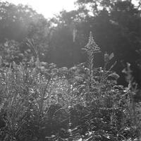 森の朝。 - SunsetLine
