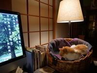 猫たちの冬支度 - ご機嫌元氣 猫の森公式ブログ