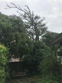 雨のコンパウンド - Healing Garden  ー草庭ー