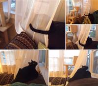 窓際のニャンコとしっぽ - にゃんこと暮らす・アメリカ・アパート