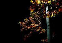 10月16日 今日の写真 - ainosatoブログ02