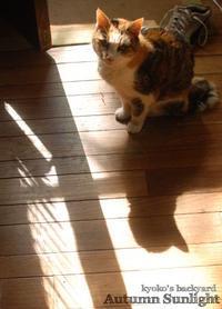 秋の日差し - Kyoko's Backyard ~アメリカで田舎暮らし~