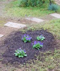 植えまくり&新しいDIY - HOME SWEET HOME ペコリの庭 *