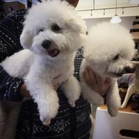 Hello Sakura & Maru!! - Doggie Do!! / good dog and hello cat !!