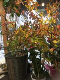 枝ものでお家に秋を。 - ルーシュの花仕事