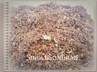 忘れな草(発芽) - SingleSonGran