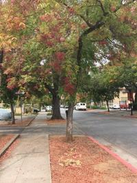 秋、、 - ブリアンヌのお散歩日記