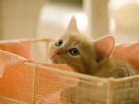 子猫ちゃん - 信仙のブログ