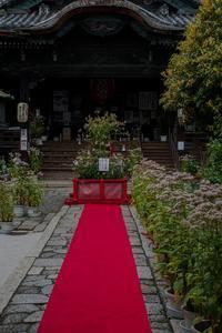 藤袴祭り~革堂行願寺②(再訪) - 鏡花水月