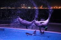 夜のイルカショー - andante...