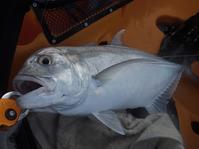 マッチ・ザ・ベイトと逆の発想!? 2017年10月18日 - Pescador(釣り人)の日常