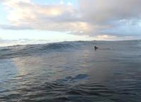 今日行かねば。 - AFRO SURF