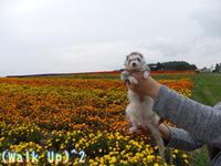 10月のはっぴぃばーすでい♪ - Walk Up! Walk Up!!