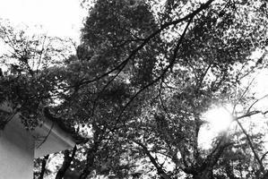 秋の寺 - パトローネの中