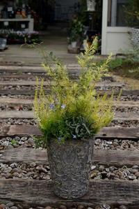 メラレウカとカルーナの寄せ植え - ヒバリのつぶやき