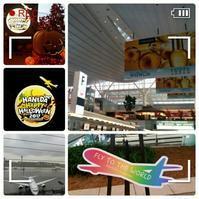 【生中継】羽田空港にいます♪ - コグマの気持ち
