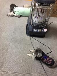 暖かーいブランケット、ベッド - 輸入犬用品・雑貨 DOGPLANETのBlog