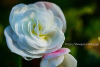 花を・・・ - ショーオヤジのひとり言
