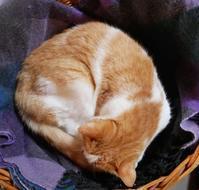 まるまるモンなつ - ご機嫌元氣 猫の森公式ブログ