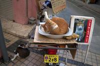 猫の手も - 京都ときどき沖縄ところにより気まぐれ