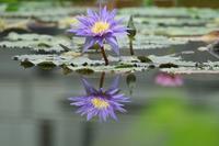 掛川花鳥園・花1 - 暮らしの中で