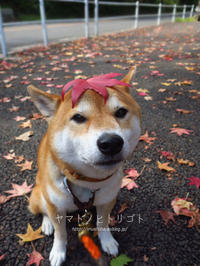 秋一番【フォトムービーあり】 - yamatoのひとりごと