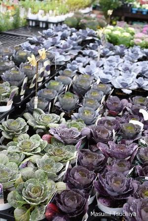 ガーデンメッセ秋の大感謝祭 - この植物をお買い2